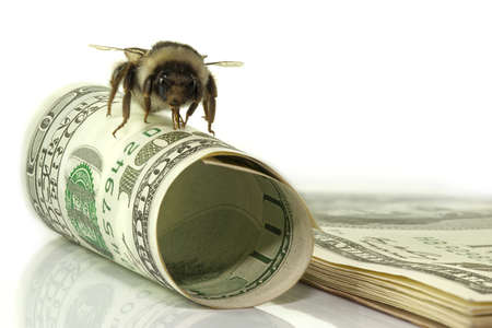 one hundred dollars for business and bumblebee pack bills Stock Photo