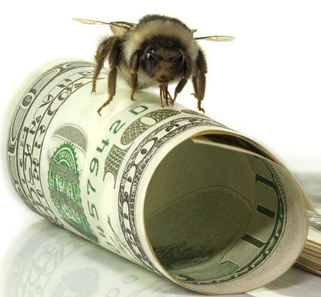 one hundred dollars for business and bumblebee pack bills Stock Photo - 13767984