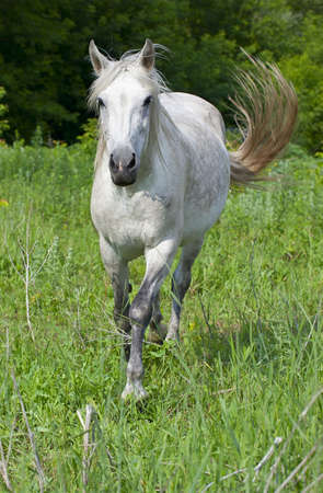 horse on a green meadow in the wood Stock Photo