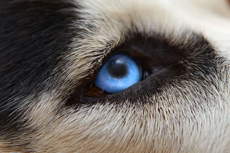 Malicious wolf sight of eyes close up photo