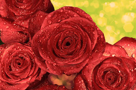 background from red wet roses with water droplets  macro