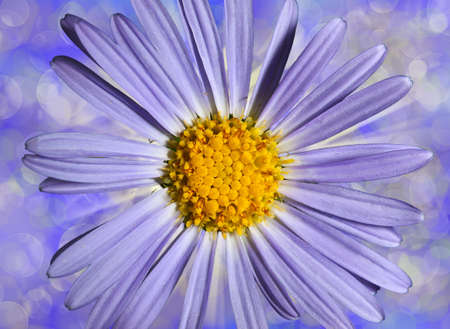 flower blue daisywheel on varicoloured background side photo