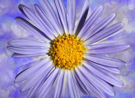 flower blue daisywheel on varicoloured background side Stock Photo