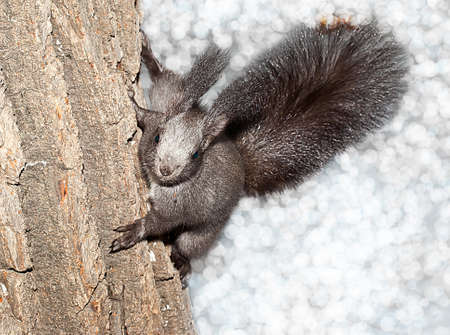 the squirrel in plays in park outdoors