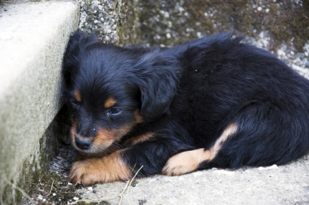 Bang Verlaten Puppy Liggend in de hoek