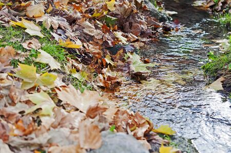 Colorful autumn leaves falling in water and on the ground Stock Photo