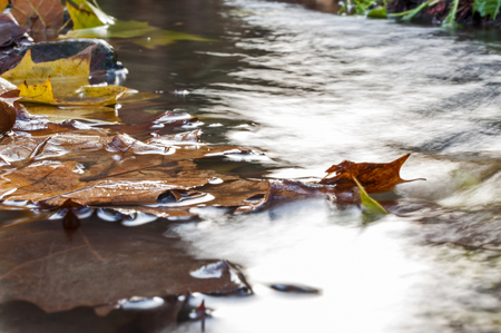 water fall: Colorful  leaves being carried downstream