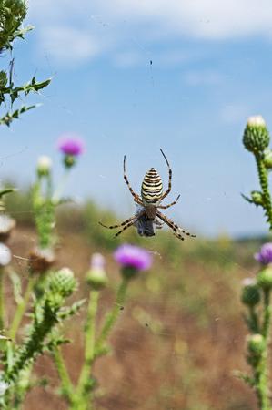 cabeza abajo: araña al revés en la telaraña contra el cielo azul Foto de archivo