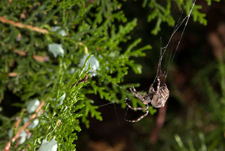 medium size: The spider wove a web of medium size in the tree