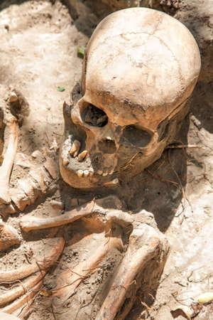 Skull and bones found by archeologists. Moldova Banco de Imagens