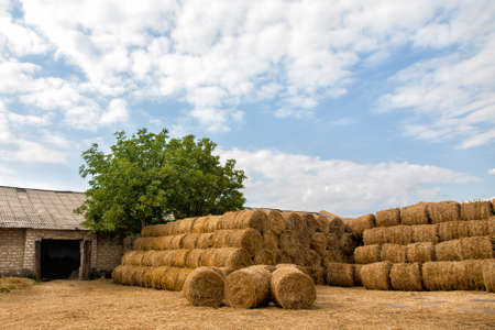 warehousing: Many bales of hay stacked in many rows.