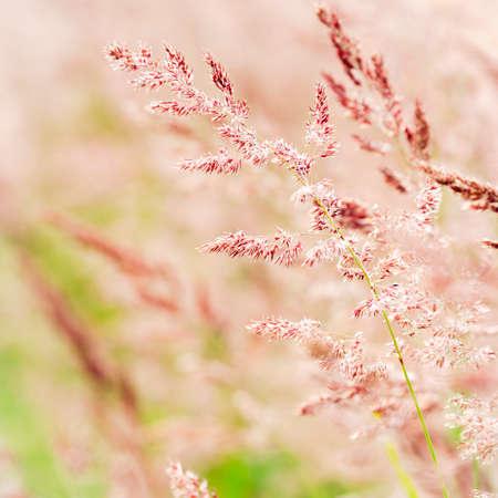 Close up of grasses in Finnish summer Zdjęcie Seryjne