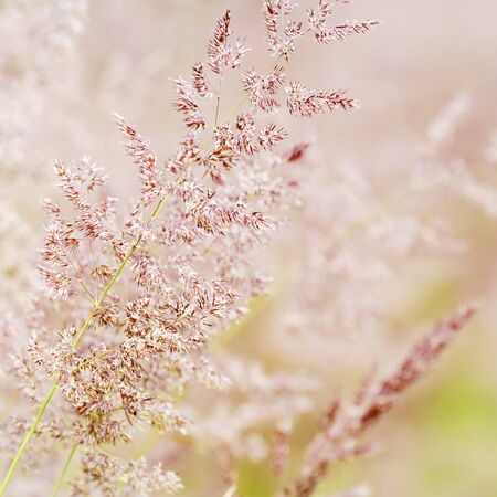 Close up of grasses in Finnish summer Stock Photo