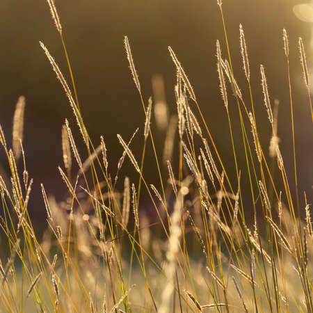 warm colors: Fondos de la naturaleza con colores cálidos