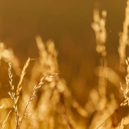 colores calidos: Fondos de la naturaleza con colores c�lidos