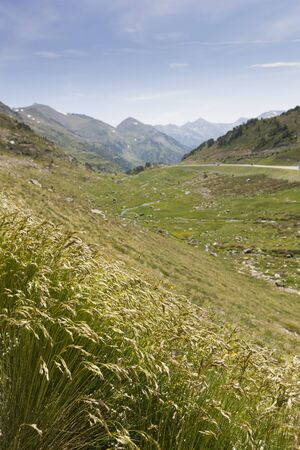 pyrenees: Grass is growing in the Pyrenees