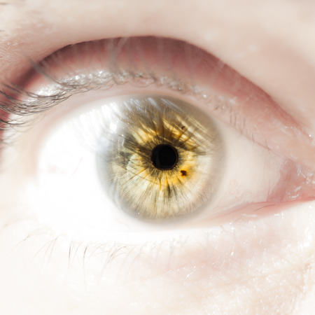 sense of sight: Close up picture of a human eye Stock Photo