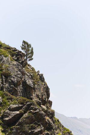 scarp: Lonely Pine Tree
