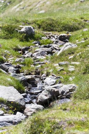 rivulet: Mountain Creek