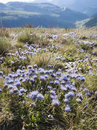 pyrenees: Flowers of the Pyrenees Stock Photo