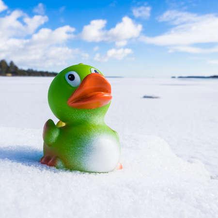 pato de hule: Pato de goma en la nieve