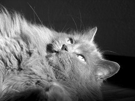smallness:       cat