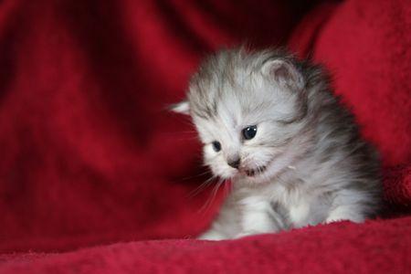 smallness: kitten Stock Photo