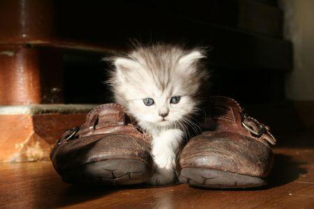 antics: kitten Stock Photo