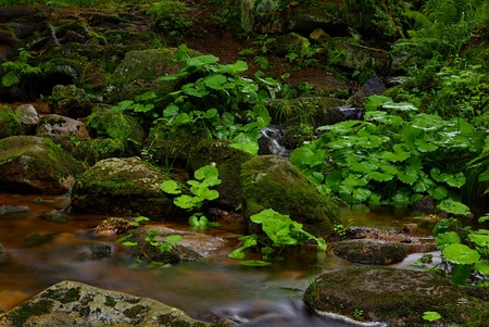 Mountain stream and mossy stones