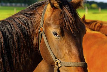 Een één paard onder een kudde pastureing paarden Stockfoto