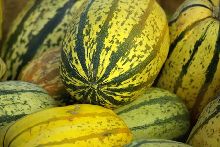 A composition of gourds in the display Stock Photo