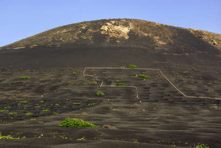 View of the vineyard area La Geria on the Isla de Lanzarote with those hollows surrounded by lava stone walls typical for this area
