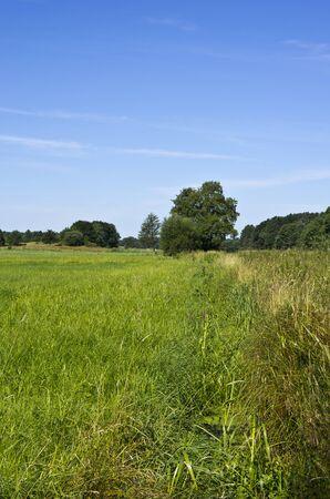 Landscape of a wet meadow