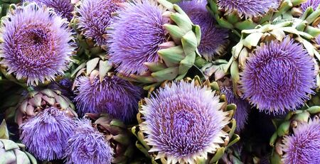 Artichoke flowers Stock Photo