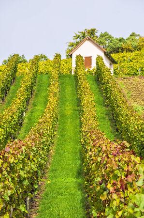 Vineyard in autumn near Heilbronn, Germany.