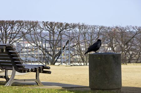 Park bench, Crow and dust bin at a Sunny Place.