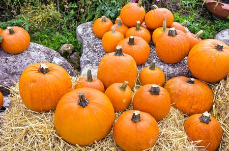 Pumpkins on diplay at a farmers market.