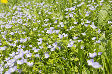 Florets on a meadow in spring. Stock Photo
