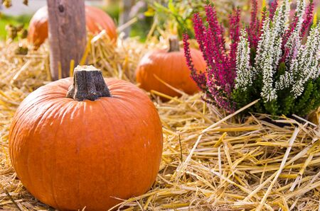Plants, straw and pumpkins on display at a farmers market. Stock Photo