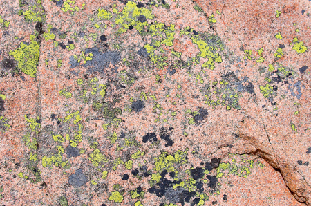 hardrock: Surface of a granite rock covered by union. Stock Photo