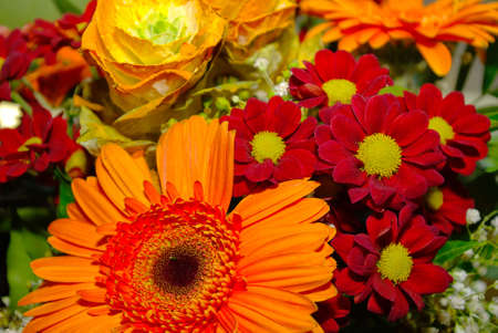 Colorful bouquet of cut flowers. Stock Photo