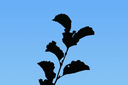 Silhouette of a plant in front of a blue sky.