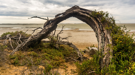 archway: Natural Archway - a scenic fallen tree in the Coorong, South Australia. Nature does some fantastic things...