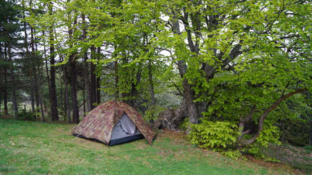 freetime: camping tent in a forest Stock Photo
