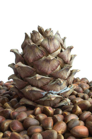 Siberian pine cone and nuts isolated on white Stock Photo