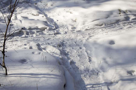 junction of pathes in the snow photo