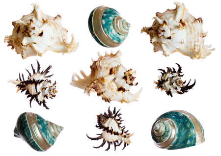 set of spiral shells isolated on white (diferent perspectives of 3 shells)