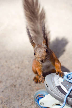 brich: the squirrel and roller Stock Photo