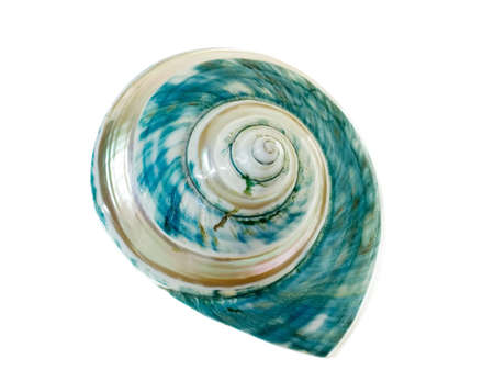 mother-of-pearl shell isolated on white