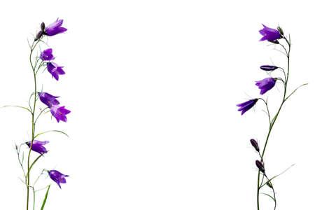 template pattern of bellflowers